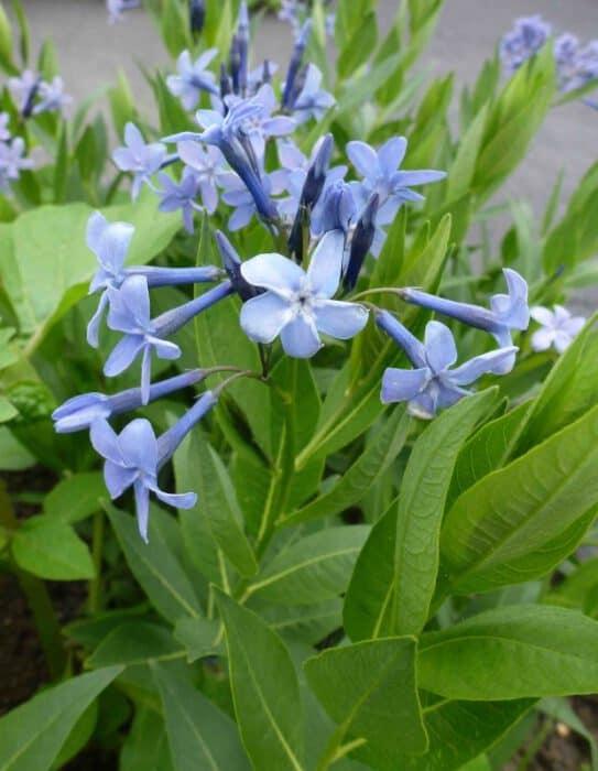 blauwe bloemen namen