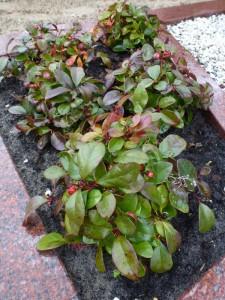 Planten voor een graf