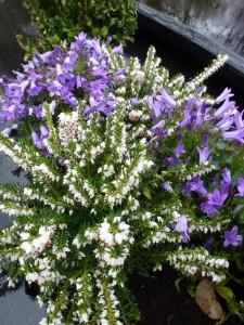 planten voor op graf