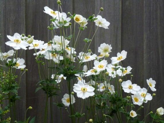Witbloeiende planten