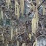Corylus avellana Contorta – Kronkelhazelaar