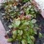 Planten voor een graf – Geschikte grafbeplanting